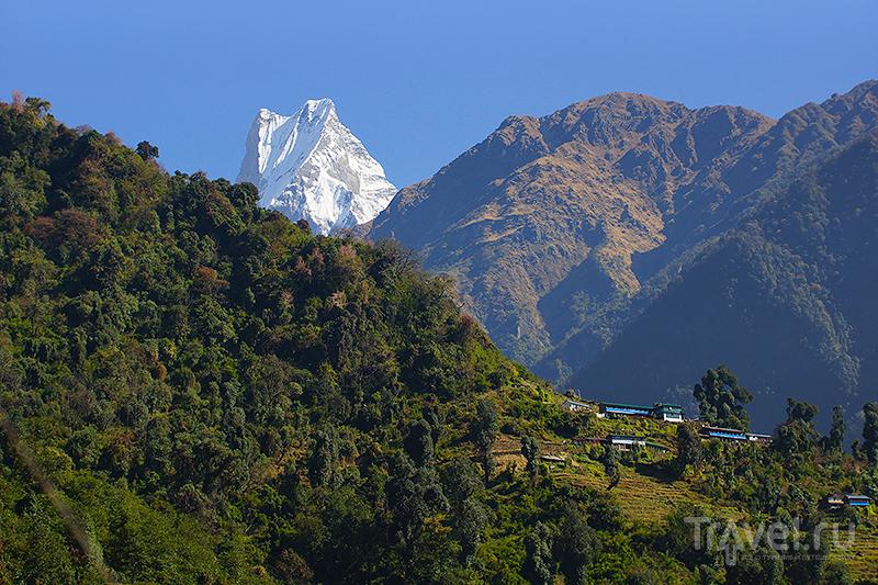 Населенка / Фото из Непала
