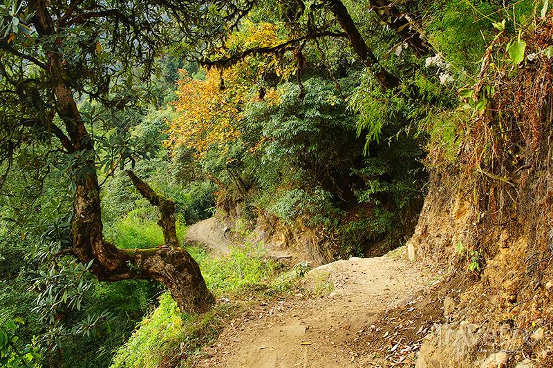 Рододендроны / Фото из Непала