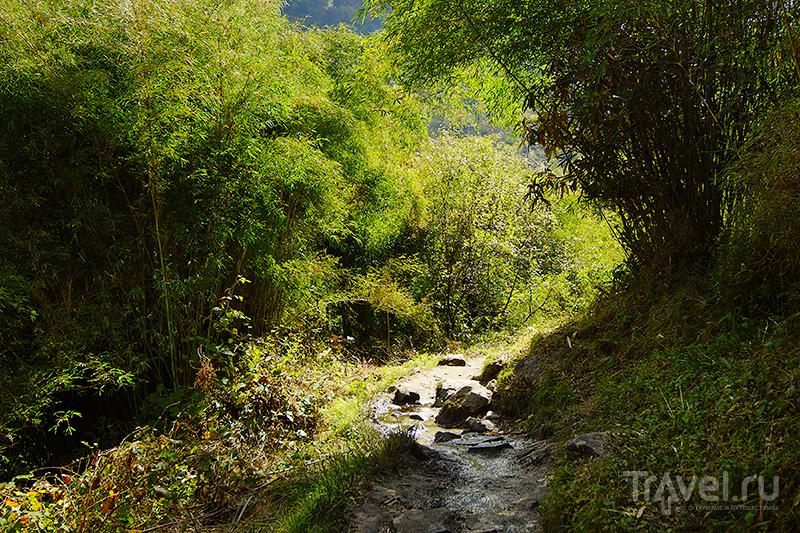 Бамбуковые заросли / Фото из Непала