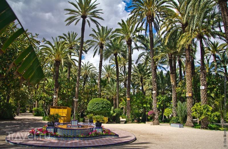 Эльче - пальмовый рай. Испания / Фото из Испании