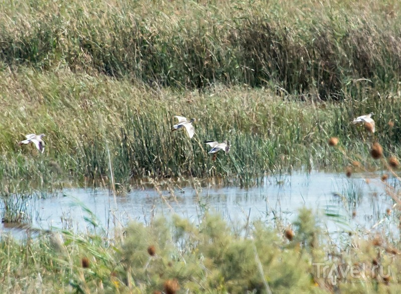 Что не входит в All Inclusive.  Птицы дельты реки Гёксу / Турция