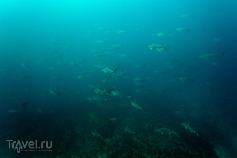 В преддверии 8 марта: подборка самых фотогеничных акул / ЮАР