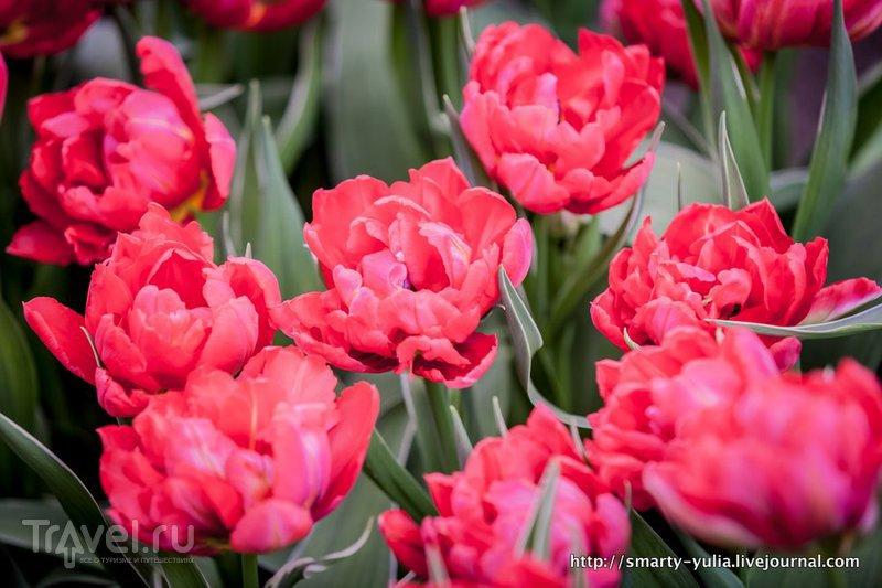С первой пятницей весны! / Нидерланды