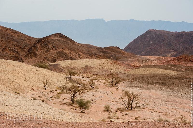 """Национальный парк """"Тимна"""" в Израиле / Фото из Израиля"""