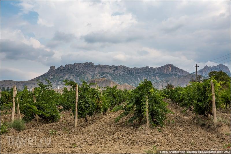Долина Роз в Крыму / Фото с Украины