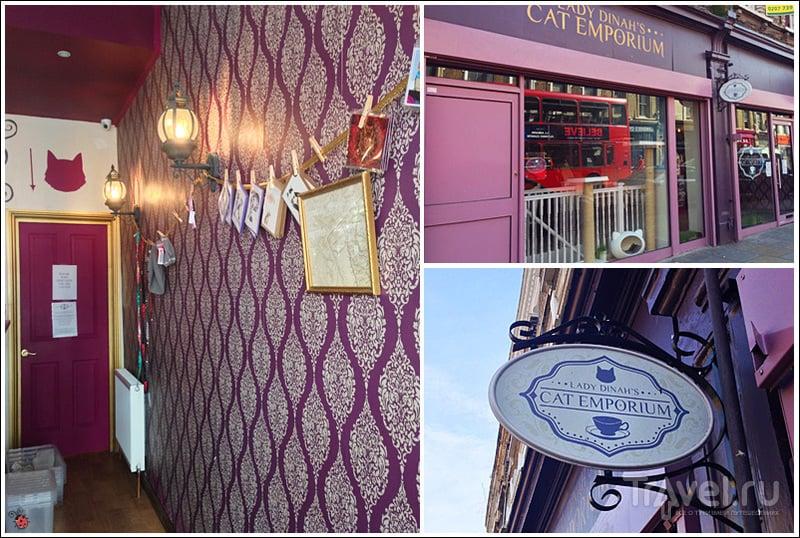 Лондон, кошачье кафе Lady Dinah's Cat Emporium / Великобритания