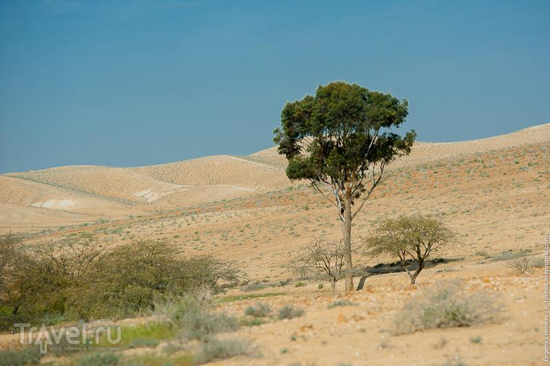 Эйн Авдат / Израиль