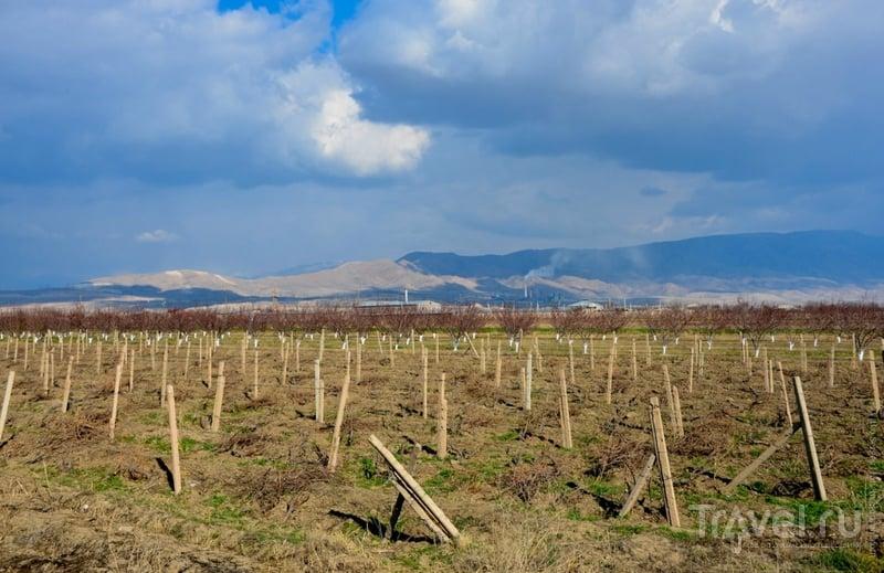 Виноградники. Армения / Фото из Армении
