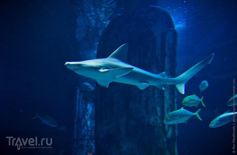 Акулы Лондона / Фото из Великобритании