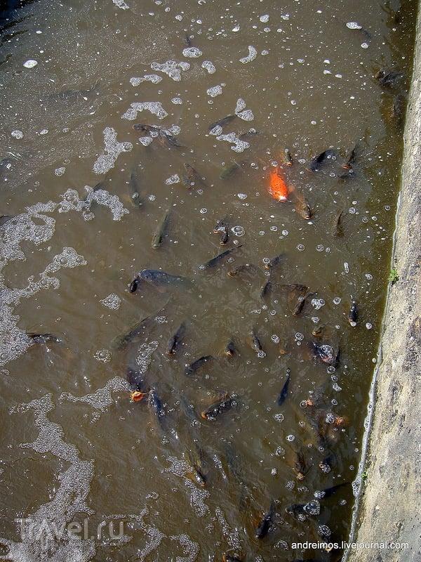 Рыба во рву / Фото из Франции