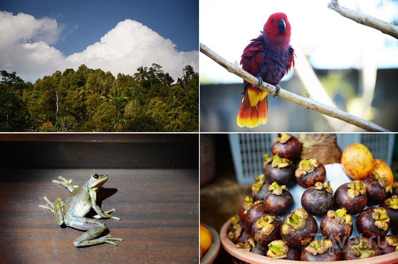 Бали 2013 / Индонезия