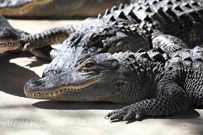 Парк Эверглейдс.Флорида, США / Фото с Виргинских островов (США)