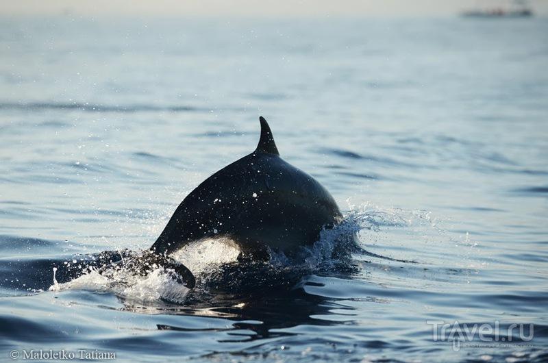 Бали 2013. Экскурсия к дельфинам / Индонезия