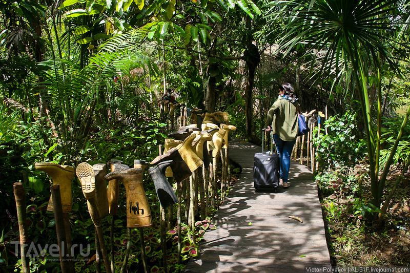 В джунглях дельты реки Ориноко. Венесуэла / Фото из Венесуэлы