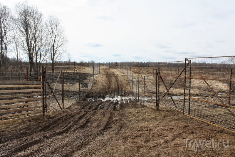 Оленья ферма на Смоленщине / Россия