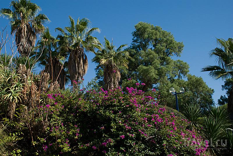 Холм весеннего креатива. Тель-Авив, Израиль / Фото из Израиля
