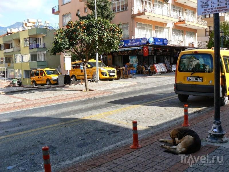 Турция. Флора и фауна / Турция