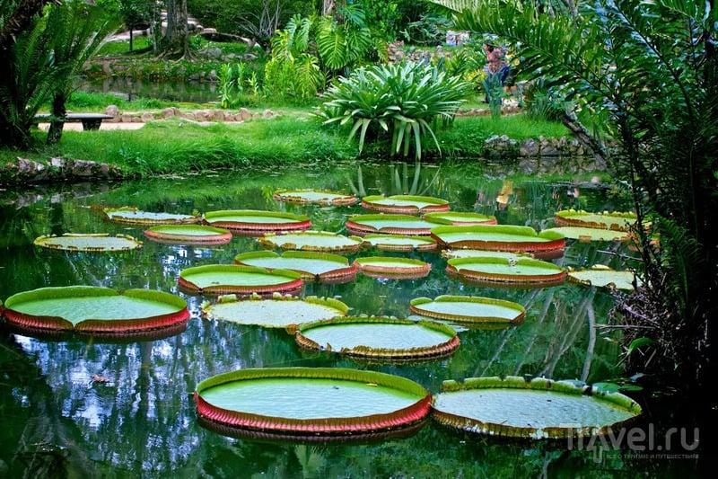 Ботанический сад. Рио-де-Жанейро, Бразилия / Фото из Бразилии