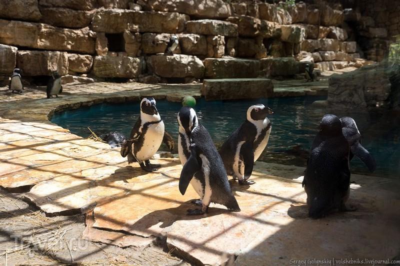Зоопарк в Иерусалиме / Израиль