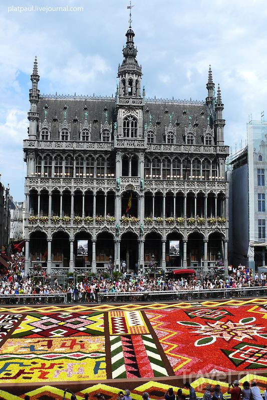 Брюссель. Цветочный ковер / Бельгия