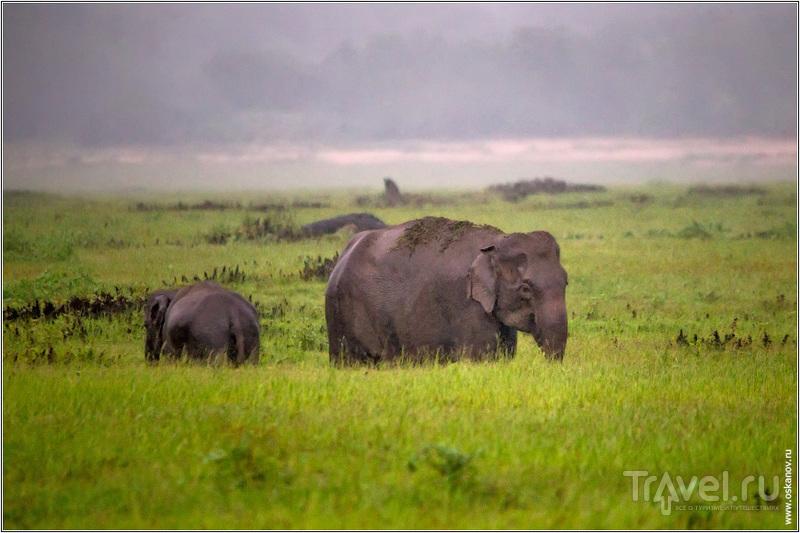 Первые два часа шёл дождь и слоны были помытые, как новенькие! / Шри-Ланка
