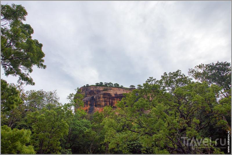 Львиная гора, где отродясь не было львов / Шри-Ланка