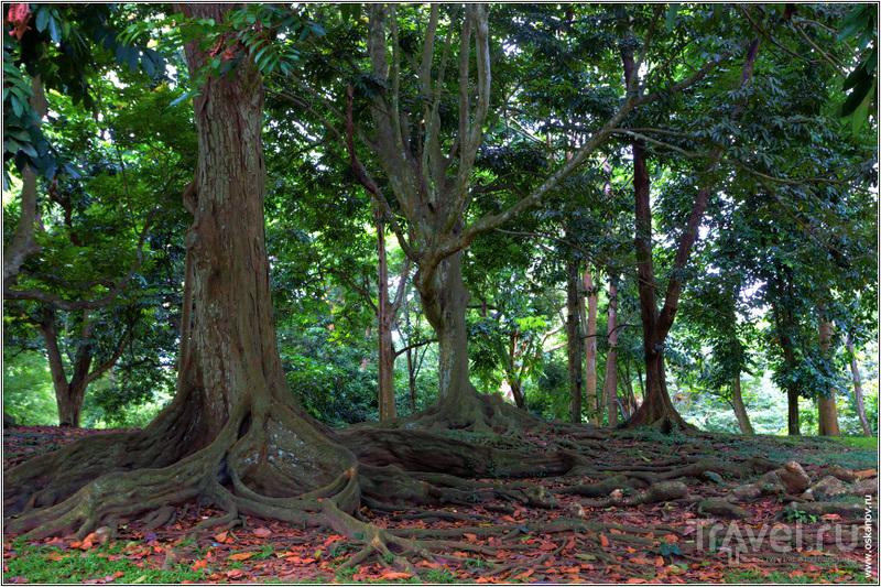 В Королевском Ботаническом Саду / Шри-Ланка