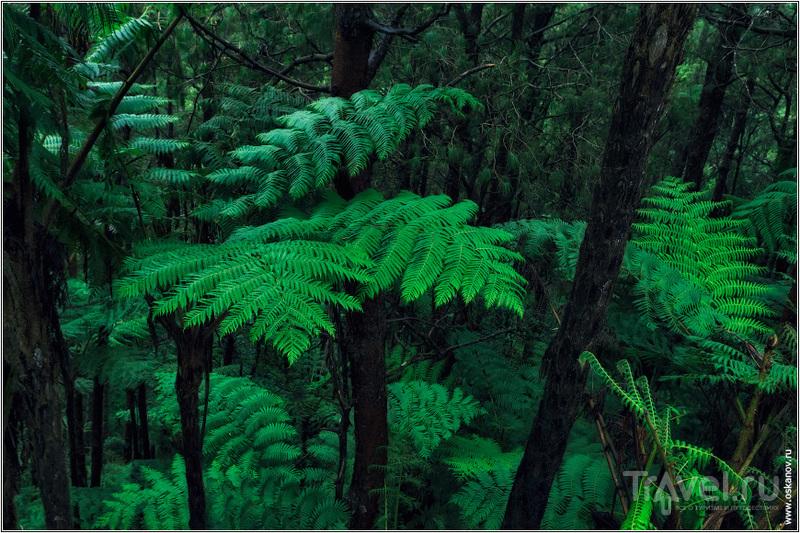 Наш путь лежал сквозь живописные горные дождевые леса / Шри-Ланка