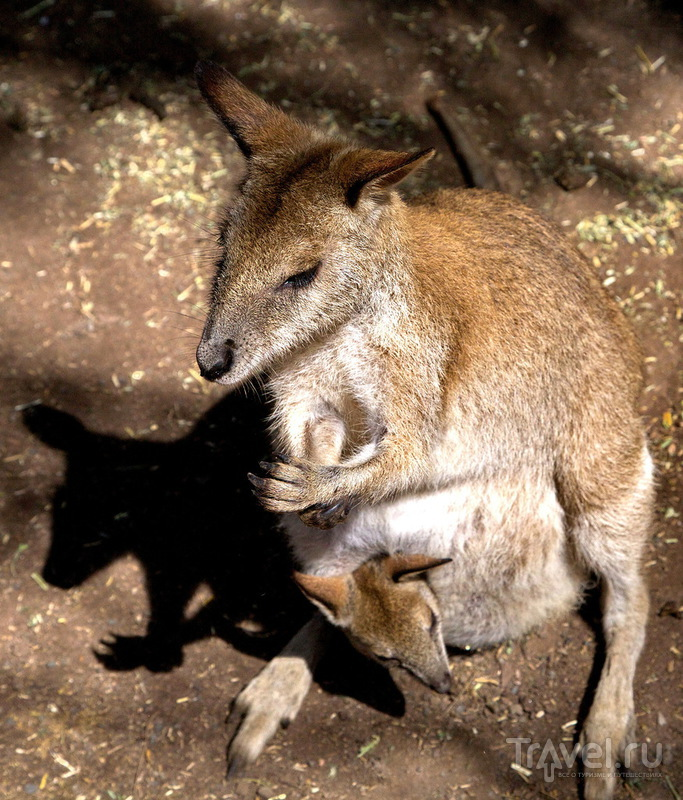 Парк диких австралийских животных / Фото из Австралии