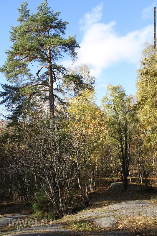 Осенний парк в Стокгольме / Швеция