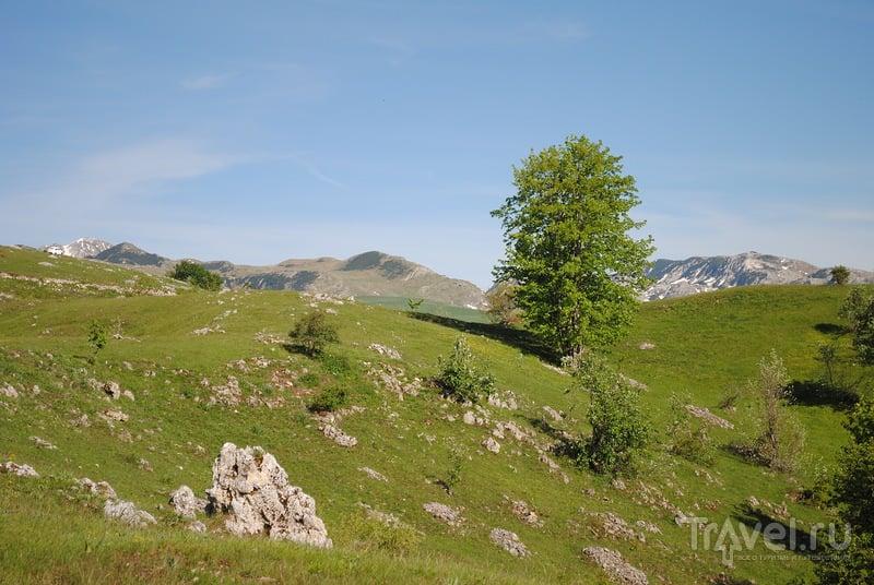 """Север Черногории: горный перевал от Плужине к Жабляку по НП """"Дурмитор"""" / Фото из Черногории"""