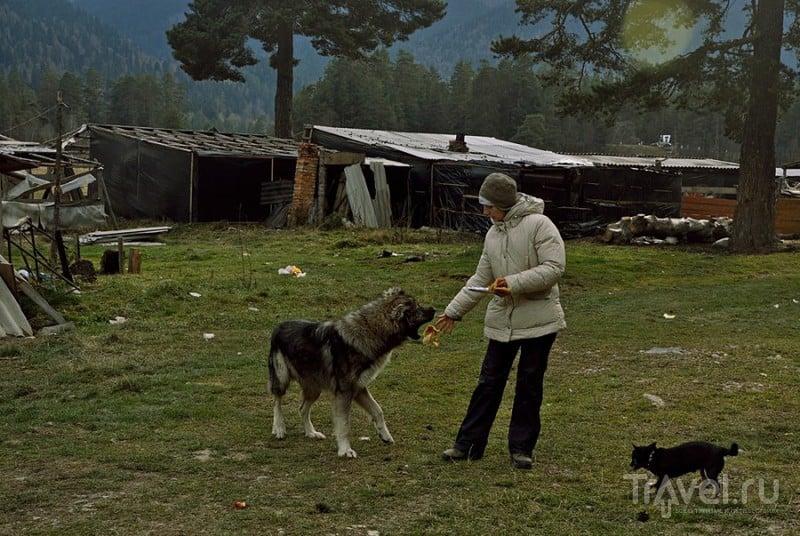 Осенняя прогулка по Архызу или Чечако в горках / Фото из России