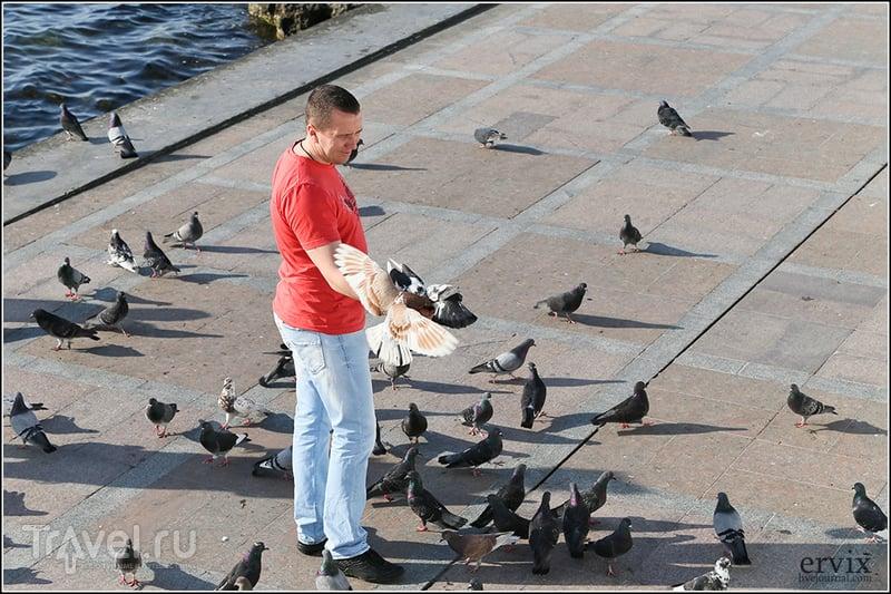 Весенний Севастополь / Фото из России