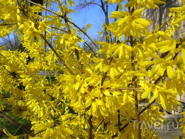 Весна во Владивостоке или Ханами по-приморски / Россия