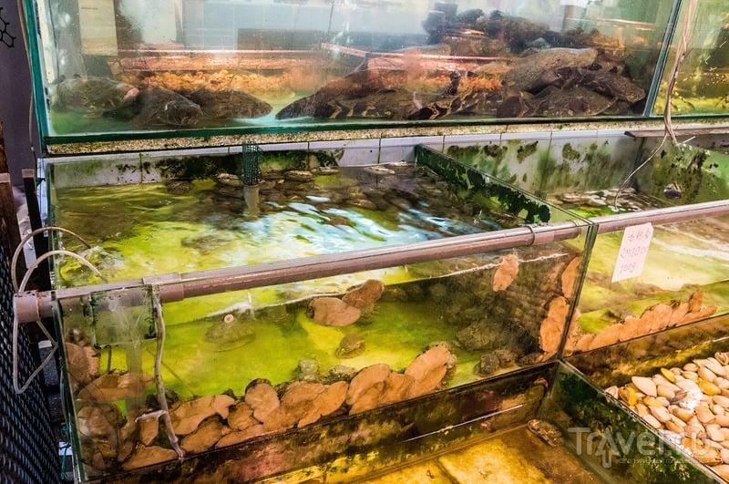 Рыбный ресторан в Кота-Кинабалу / Малайзия