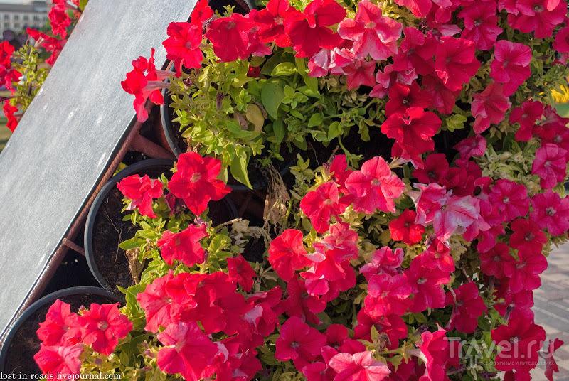 Dubai Miracle Garden. Сад цветов / Фото из ОАЭ