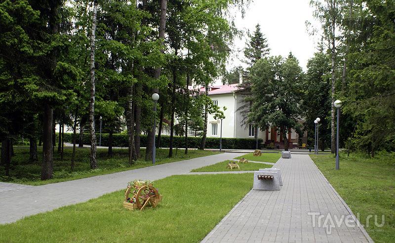 Беловежская пуща / Фото из Белоруссии