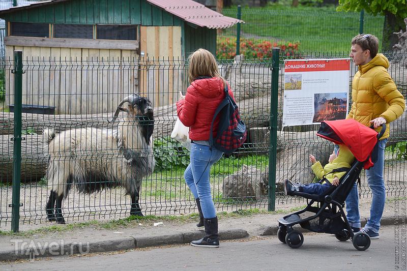Зоопарк Калининграда / Россия