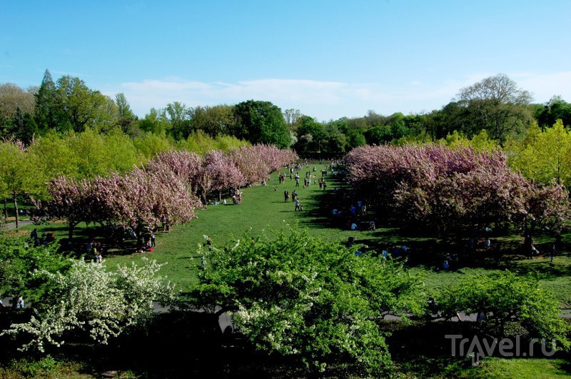 Бруклинский ботанический сад / США