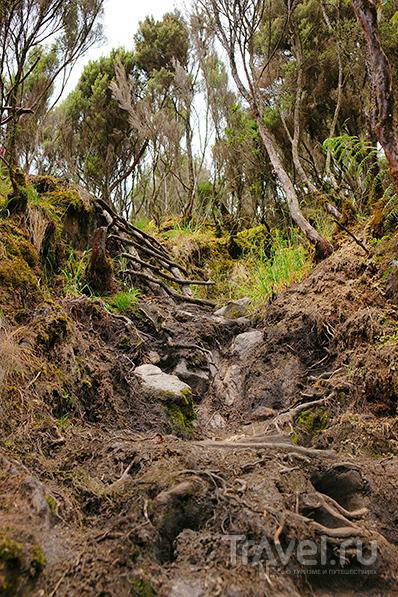 Поход на Weismanns Peak. Уганда, горы Рувензори / Уганда