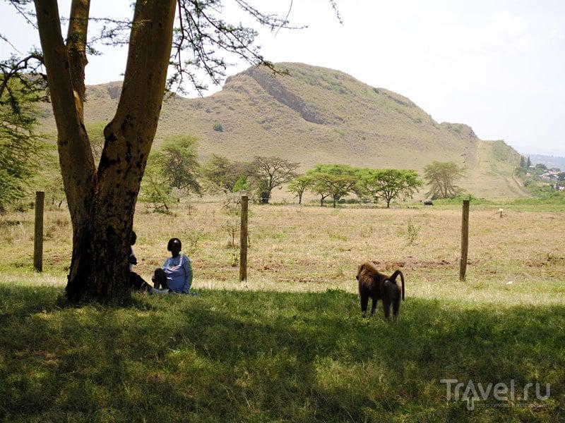 Большая Рифтовая долина и Озеро Пеликанов / Кения