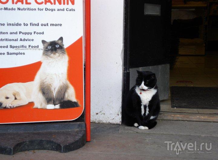 Эдинбург. Древности, виски и коты / Великобритания