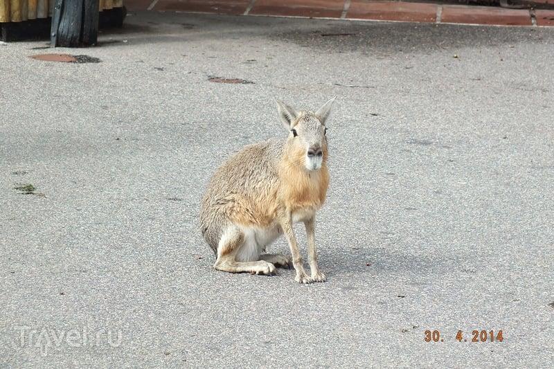 Буэнос-Айрес. Зоопарк / Аргентина