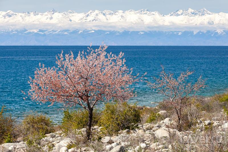 Киргизия, май 2014 / Фото из Киргизии
