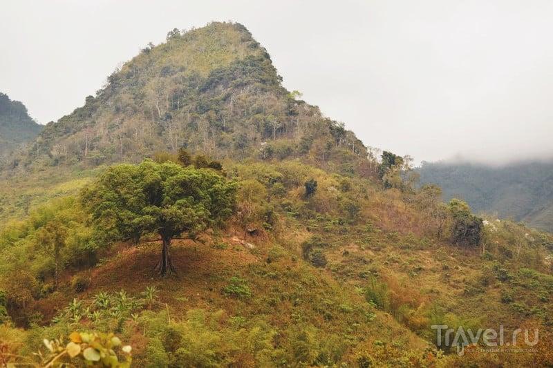 Лаосские джунгли. Дикарем по Азии / Лаос