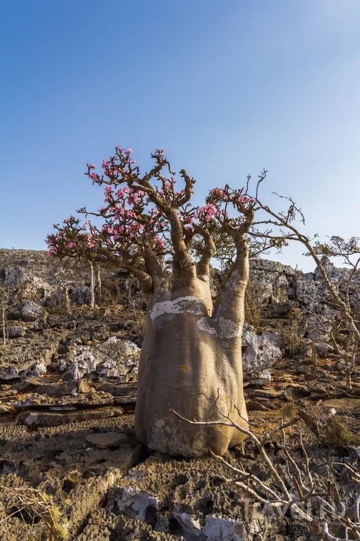 Сокотра. Драконы и бутылки / Фото из Йемена