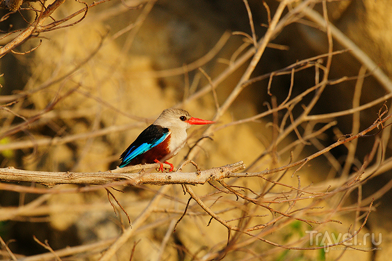 Уганда: Murchison falls national park / Фото из Уганды