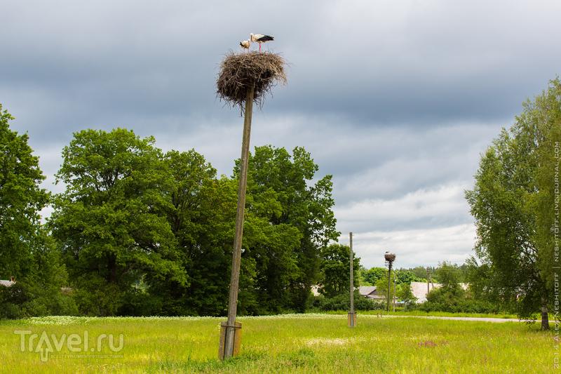 Латвийская пастораль. Мир зеленых лугов и аистов / Фото из Латвии