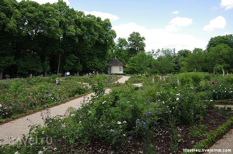 Розарий и парк Мальмезонского дворца / Франция