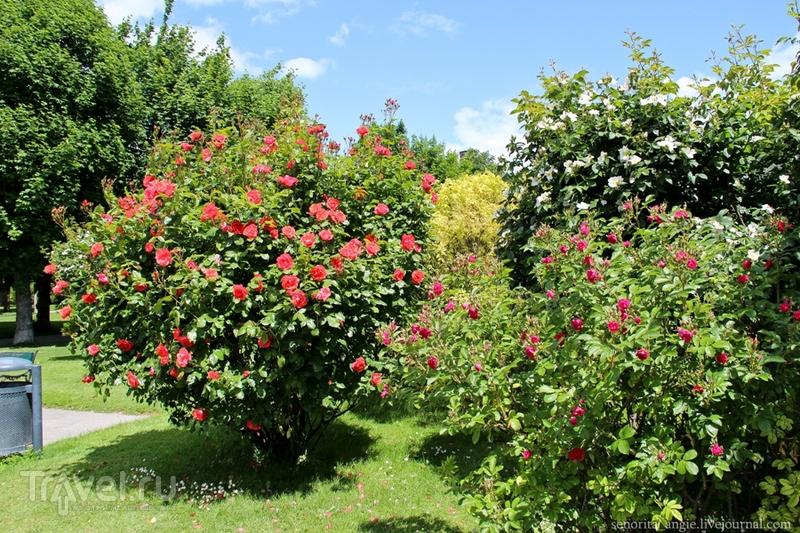 Розовое счастье в парке Фольксгартен, Вена / Австрия